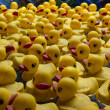 Stock Photo: Rubber ducks