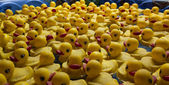 Rubber ducks — Stock Photo
