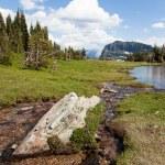 High Mountain Stream — Stock Photo