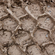 Stock Photo: Tire Tracks in Mud
