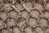 Tire Tracks in Mud — Stock Photo