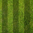 Soccer field texture with grass. — Stock Photo