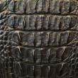 Crocodile bone skin texture background. - Photo