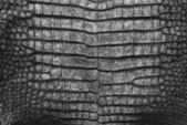 Wzór krokodyla skóra tekstura. — Zdjęcie stockowe