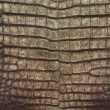 Vintage crocodile belly skin texture. - Stockfoto