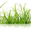 Green fresh grass isolated on the white background. — Stock Photo