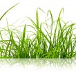 Stock Photo: Green fresh grass isolated on the white background.