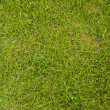 Green grass texture background field. — Foto de Stock