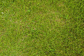 Green grass texture background field. — Stock Photo