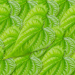 Royalty-Free Stock Photo: Green betel leaf texture.