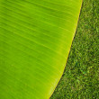 Stock Photo: Green fresh bananleaf texture on grass field.