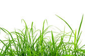 Green fresh grass isolated on the white background. — ストック写真