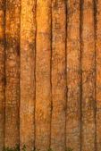 Cement wood texture. — Stock Photo