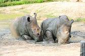 Nosorożca w parku. — Zdjęcie stockowe