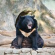 Stock Photo: Black bear in park.