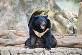 Black bear in the park. — Foto Stock