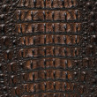 Постер, плакат: Crocodile bone skin texture background