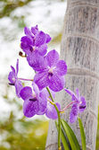 Purple orchid in the nature. — Stock Photo