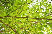 Grönt blad textur bakgrund. — Stockfoto