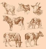 Cows hand draw sketch — Stock Vector