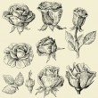 Roses doodles set - Stock Vector