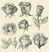 Roses doodles set — Stock Vector