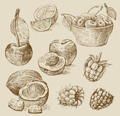 Fruits - illustration — Vecteur