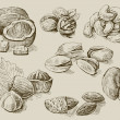 Set of nuts - Image vectorielle