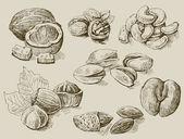 Ensemble de noix — Vecteur