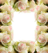 White roses frame border — Stock Photo