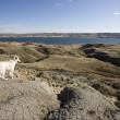 Stock Photo: Sand Castles of Diefenbaker Lake