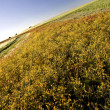 Stock Photo: Prairie Crop with weeds