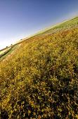 草原作物与杂草 — 图库照片