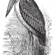 Greater Adjutant or Leptoptilos dubius vintage engraving — Stok Vektör
