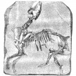 Skeleton of the great Paleotherium de Vitry, vintage engraving. - Stock Vector