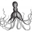 Постер, плакат: Octopus vintage engraving