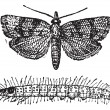 Moth, vintage engraving. — Stockvectorbeeld