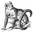 Squirrel monkey or Saimiri, vintage engraving. — ベクター素材ストック
