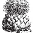 Fig.17.  Atichoke or Globe Artichoke, vintage engraving. — Stock Vector