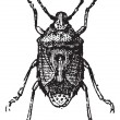 Fig 13. Bug, vintage engraving. — Vettoriale Stock