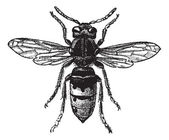 Fig 12. Wasp, vintage engraving. — Vetorial Stock
