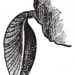 Brachiopodenfauna, Vintage-Gravur — Stockvektor  #9104422