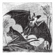 Stock Vector: Spectral Bat or Vampyrum spectrum, vintage engraving