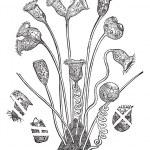 Bell Animalcule or Vorticella sp., vintage engraving — Stock Vector #9105415