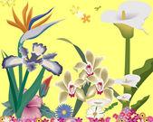 Spring flowers — Zdjęcie stockowe