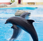 Dolphin jump — Stock Photo