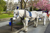 Horse and Cart in Victoria Canada — Stock Photo
