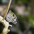 White and Black Butterfly on Tree — Stockfoto