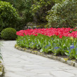 Stock Photo: Tulip Pathway