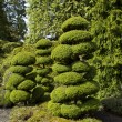 Well Shaped Trees in Japanese Garden — Stock Photo